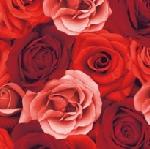 Servítky 33x33cm/3vrst. Romance (20ks)