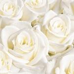 Luxusné obrúsky Duniliny 40x40cm White Dreams (50ks)
