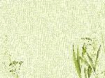 Snídaňové prostírání papírové 30x40cm Liz (1000ks)